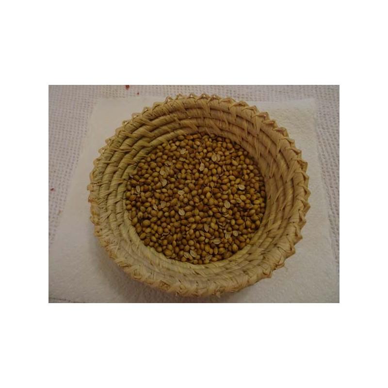 Coriandre en grains
